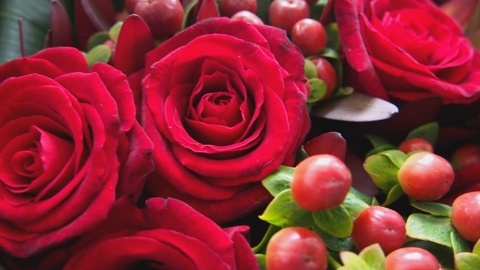 Close up of roses