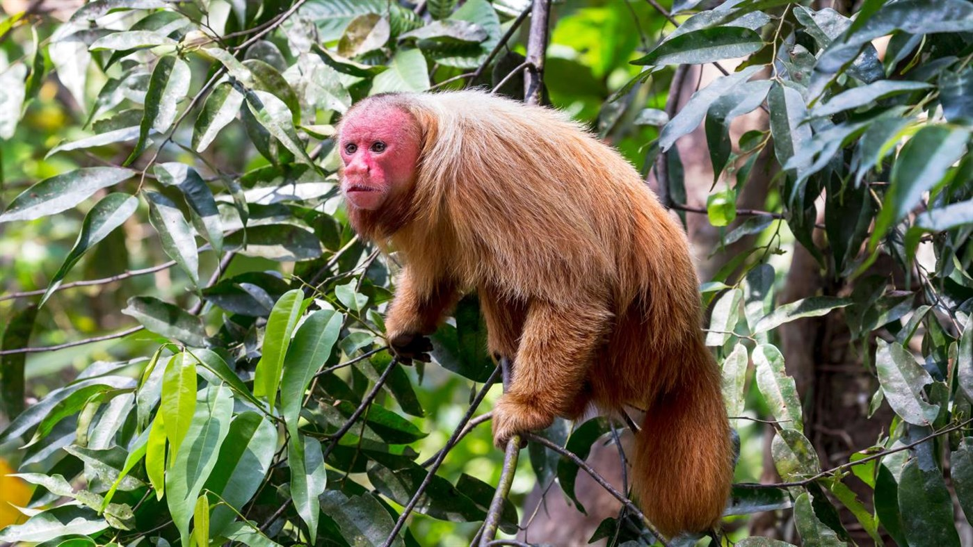 Download  Amazon Wildlife PREMIUM, Tema per Windows 10
