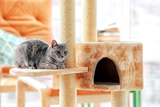 Jak opiekować się kotem w czasie pandemii koronawirusa?