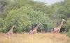 Kagera Kutangazwa na Utalii Wanyamapori Katika Mapori ya Kimisi, Burigi na Biharamulo.