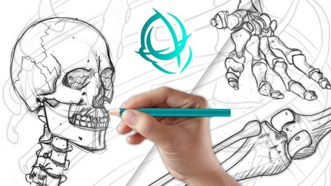 Character Anatomy School: Complete Skeletal Drawing Course