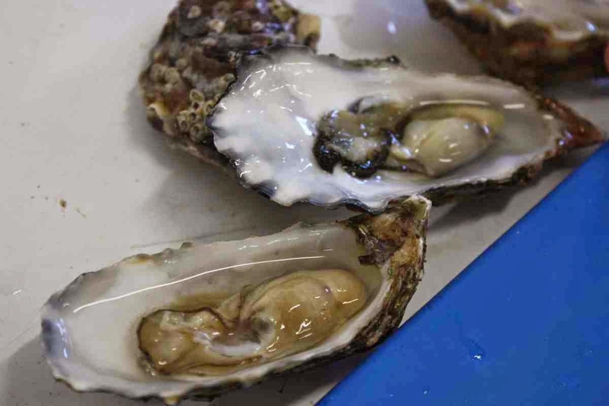 Frische Austern - am besten mit Zitronensaft und einem Glas Chablis