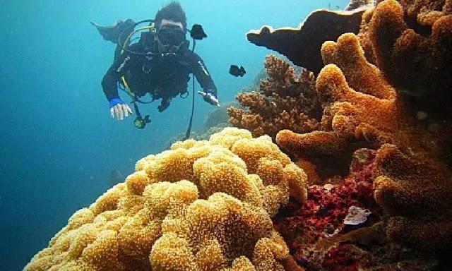 14. Taman Laut Wakatobi - Sulawesi Tenggara
