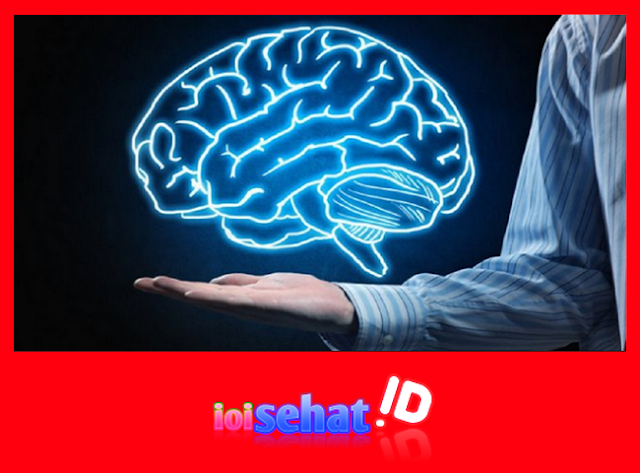 Vitamin untuk otak serta nutrisi tepat supaya menjadikan otak manusia pintar serta cerdas