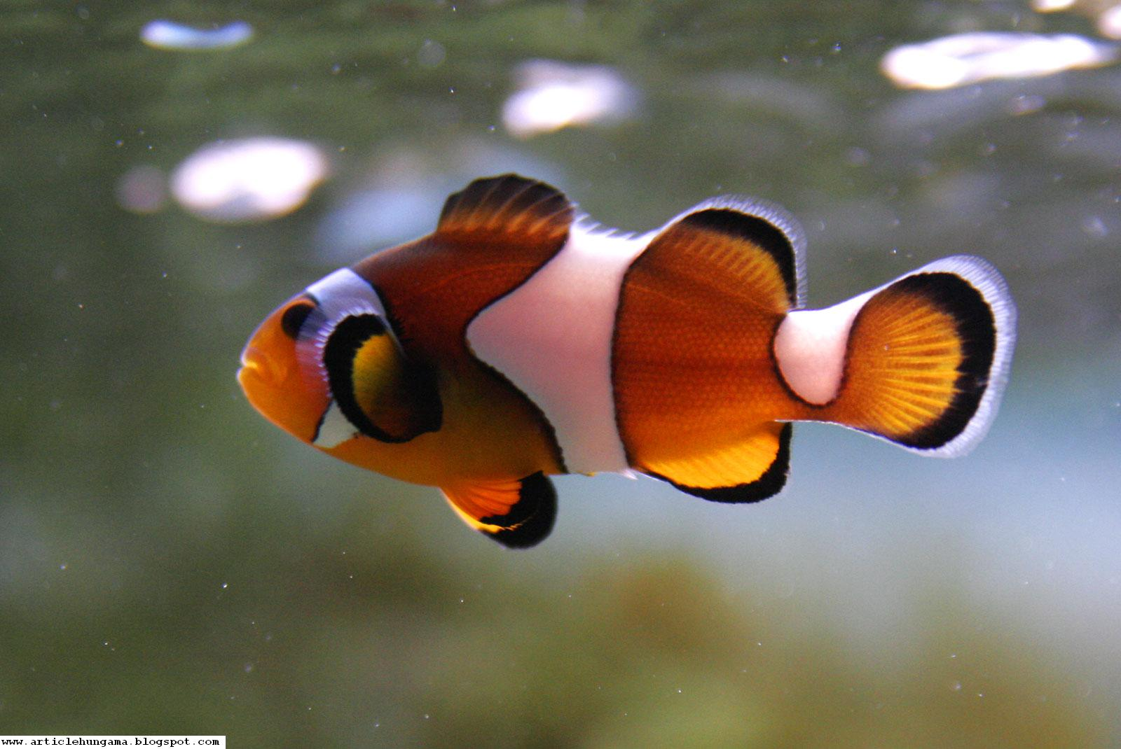 Wallpaper Treasure Beautiful And Amazing Fish In Sea