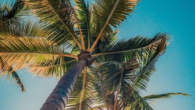 Blue sky, palm trees, trees, sun, light, nature