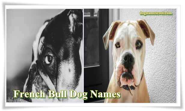 French bull dog names