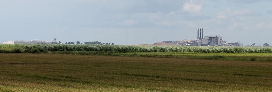 Central azucarero de Okeelanta rodeado de cañaverales
