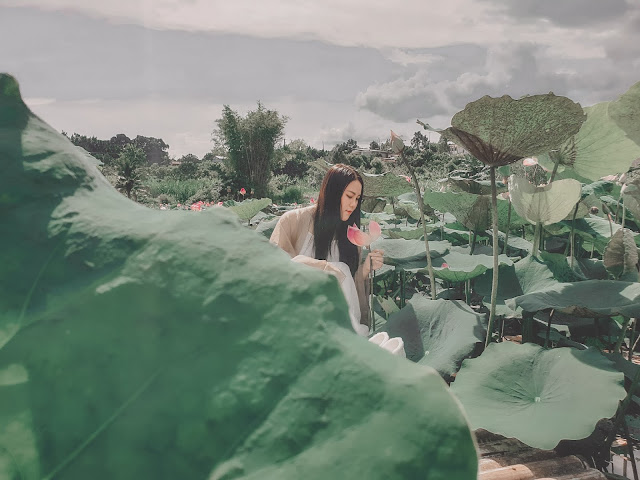 Hồ sen Đà Lạt