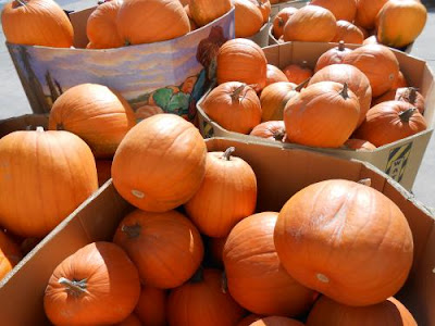 pumpkins, halloween, all saints day, jack-o-lanterns