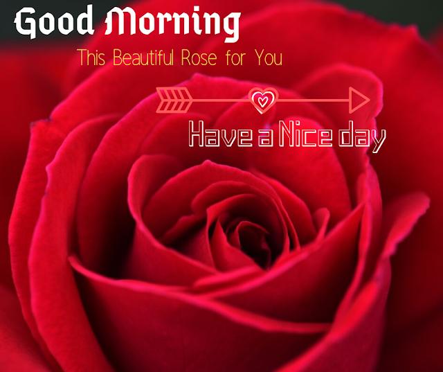 Nice Red Rose Good Morning Images