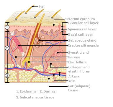 The Basics of Skin Care