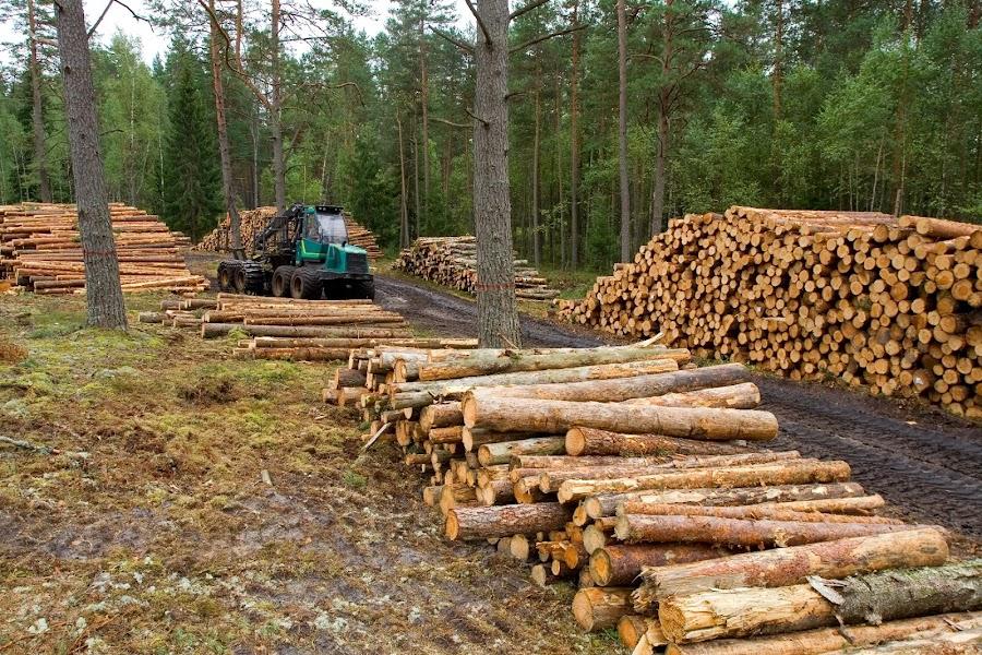 conciencia-agroecologica deforestacion