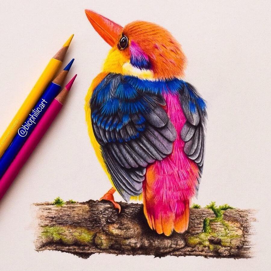 01-Dwarf-Oriental-Kingfisher-Sallyann-www-designstack-co