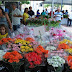 XI Festival das Flores de Holambra, em Juazeiro do Norte, será aberto nesta quinta-feira (28)