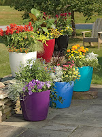 Multi-colored pots filled with a variety of plants and flowers.