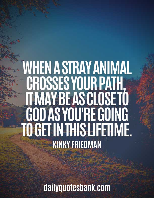 Quotes About Paths Crossing