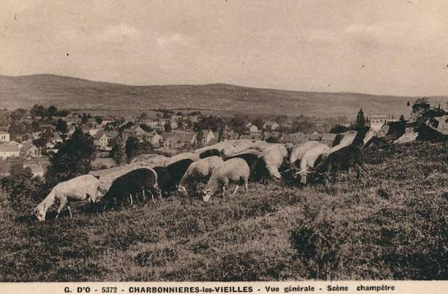 Villages d'Auvergne, moutons de Charbonnières les Vieilles.