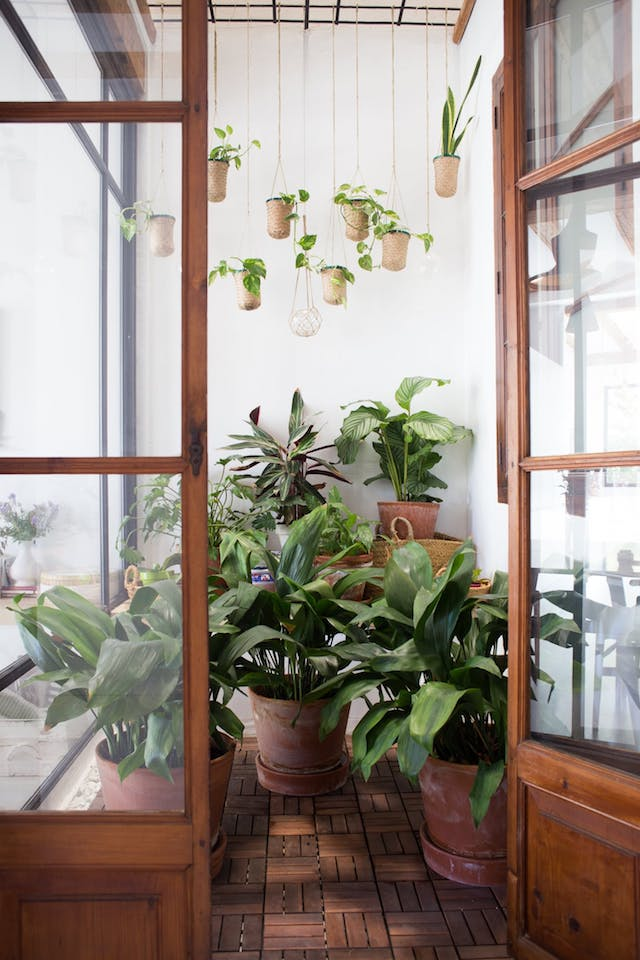 patio interior con plantas