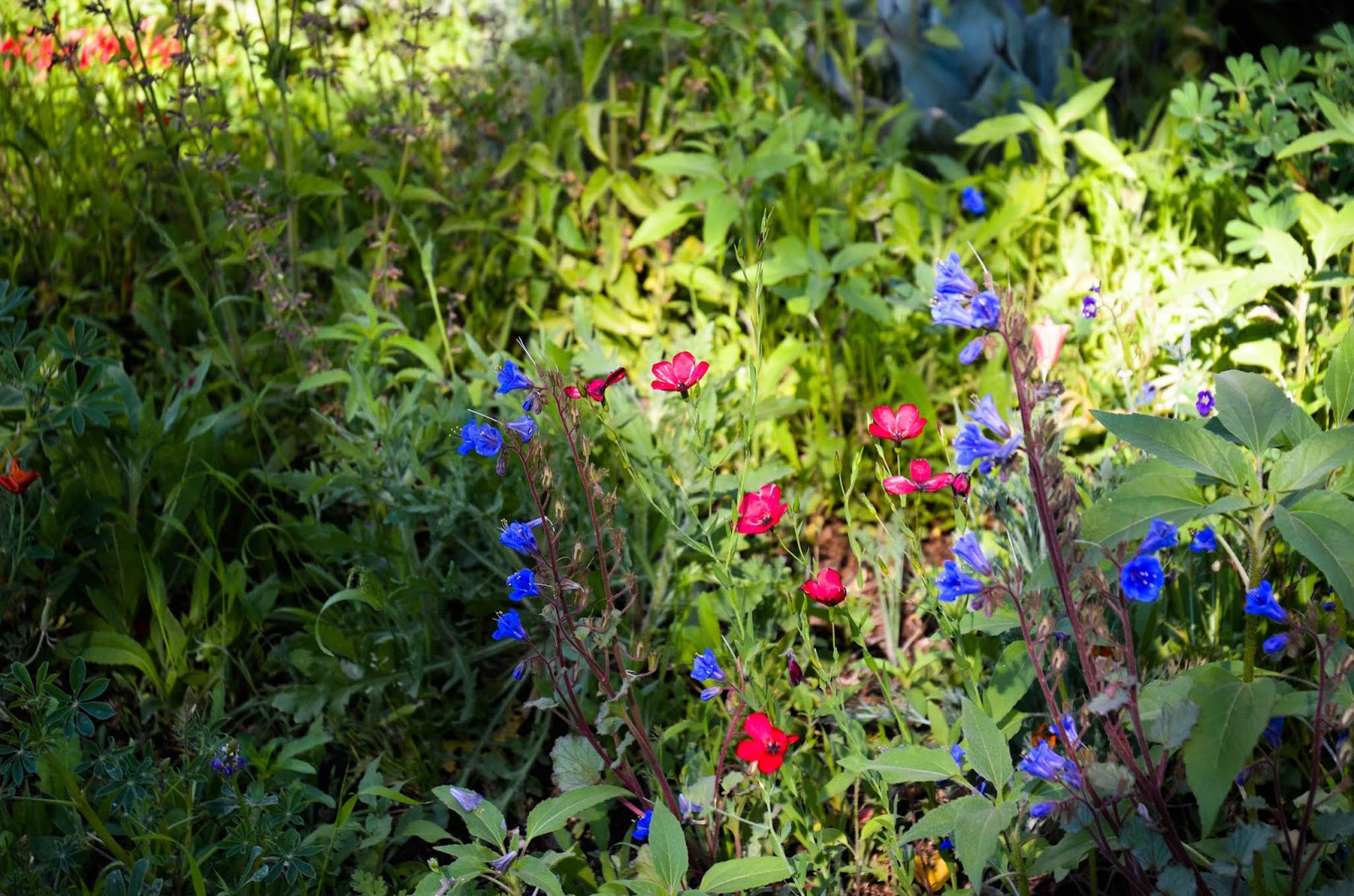 Sow Wildflower Seed In Fall For A Gorgeous Spring Display