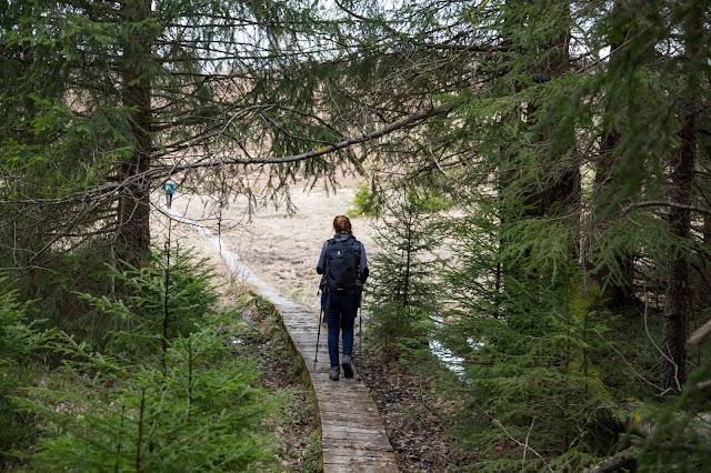 Auf vergessenen Wegen von Finsterau nach Buchwald  Wandern im Bayerischen Wald  Wanderung Nationalpark Bayerischer Wald 12