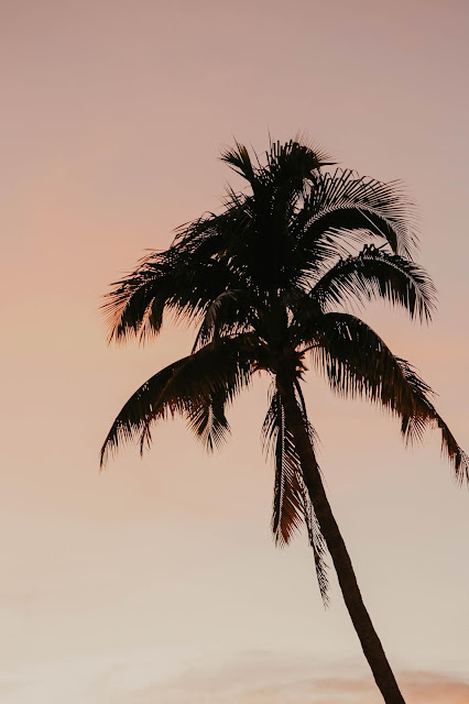 palm tree at sunset in southwest florida