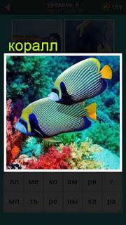 проплывают две рыбы над цветным красивым кораллом