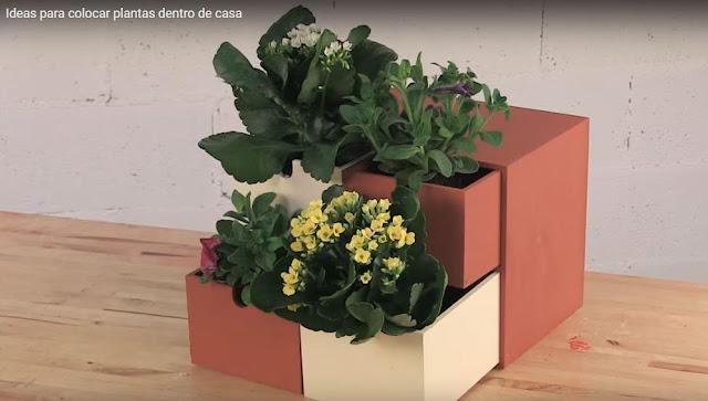 El antes y el despues de un hogar con plantas de interior