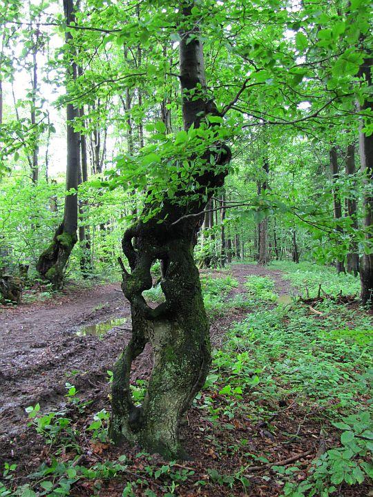 Dziwaczne drzewo.