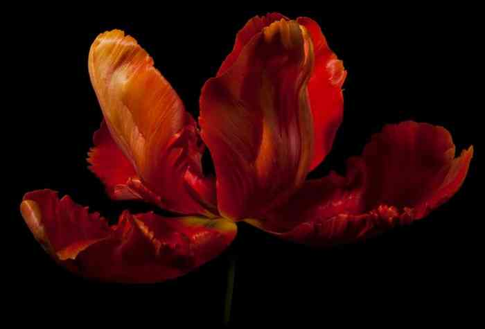 Натюрморты с цветами