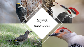 November 1 Program: Woodpeckers!