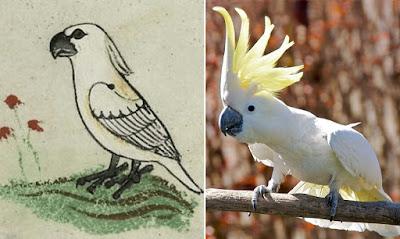 Ένας εξωτικός παπαγάλος σε χειρόγραφο του Μεσαίωνα