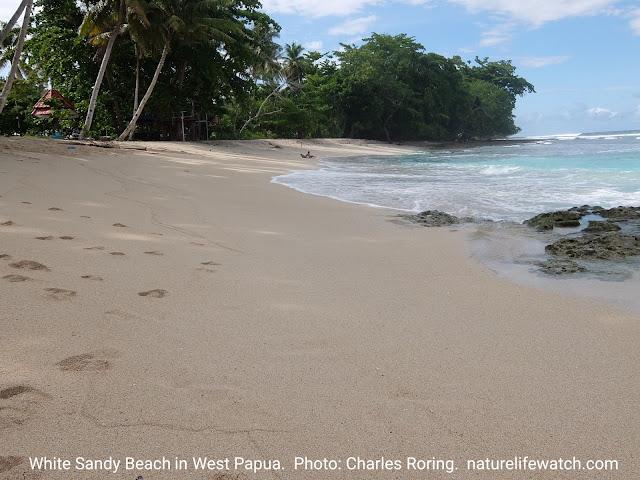 White sand beach in Manokwari