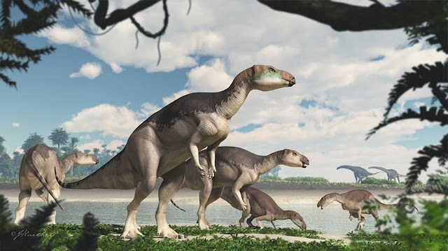 Herd of dinosaurs discovered in underground opal mine
