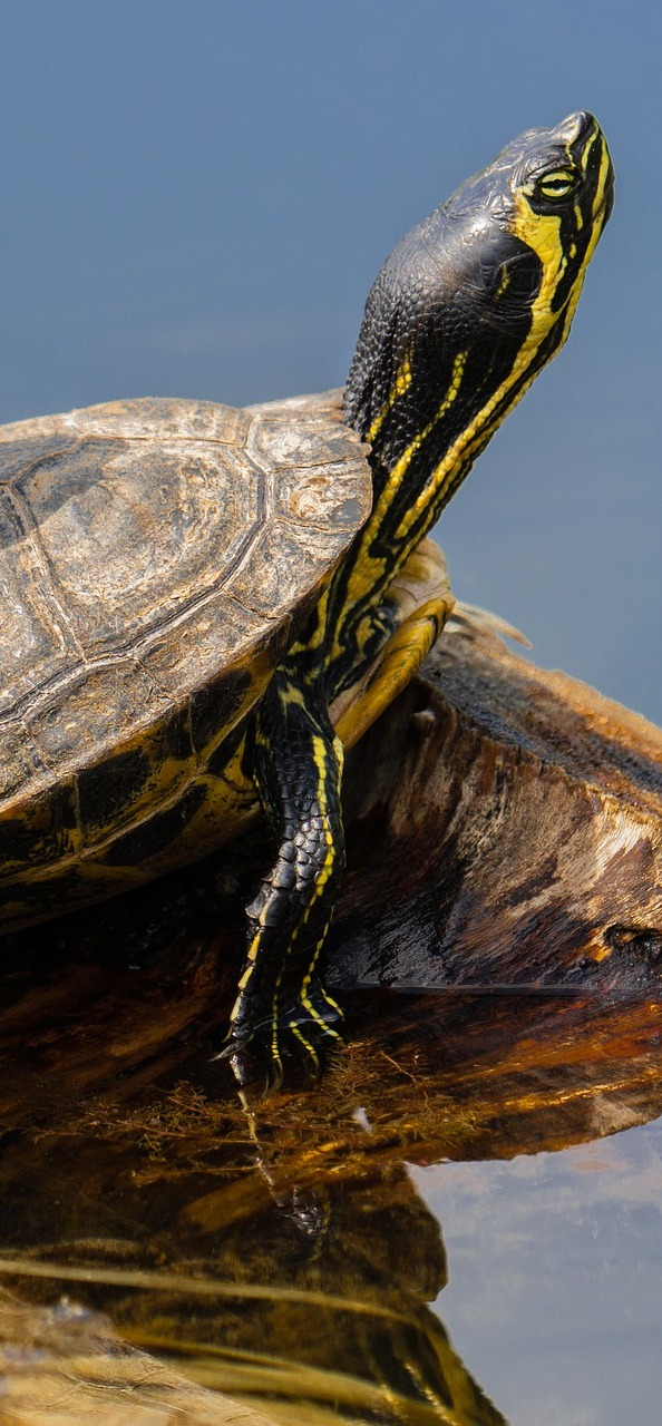 Photo of a turtle.