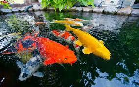 thùng nhựa nuôi cá composite