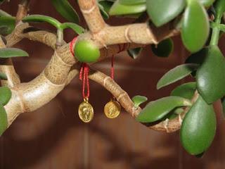 Денежное дерево способно приумножить богатство