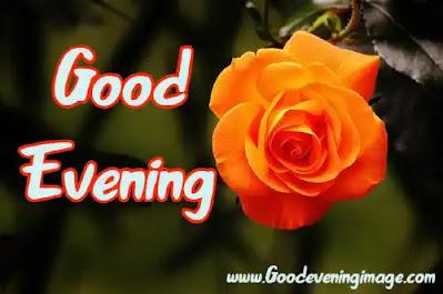 Good evening rose flower images