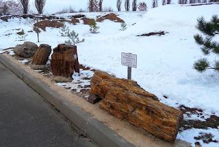 Оглядовий майданчик РЛП «Клебан-Бик». Експозиція зкам'янілих дерев араукарій