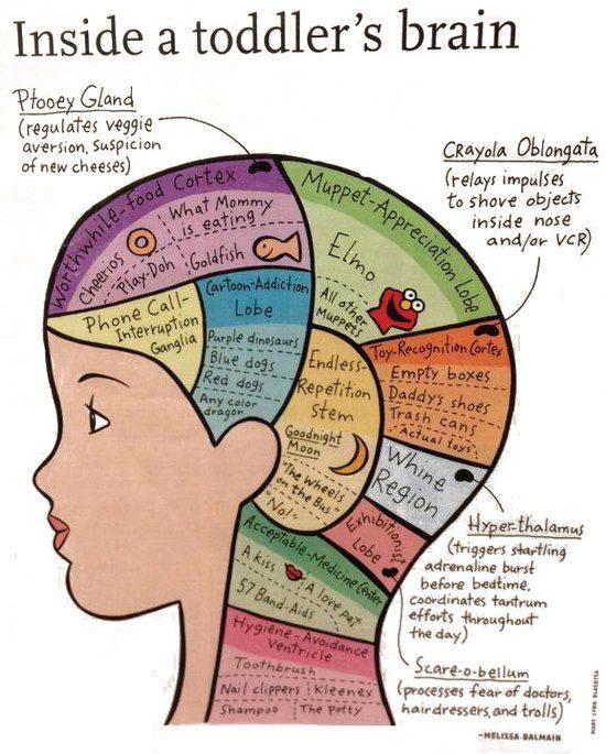 A Child's Brain!!