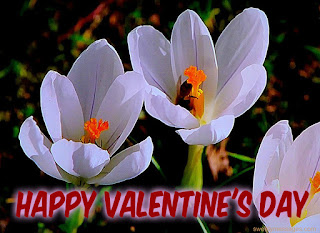 happy valentine day pics