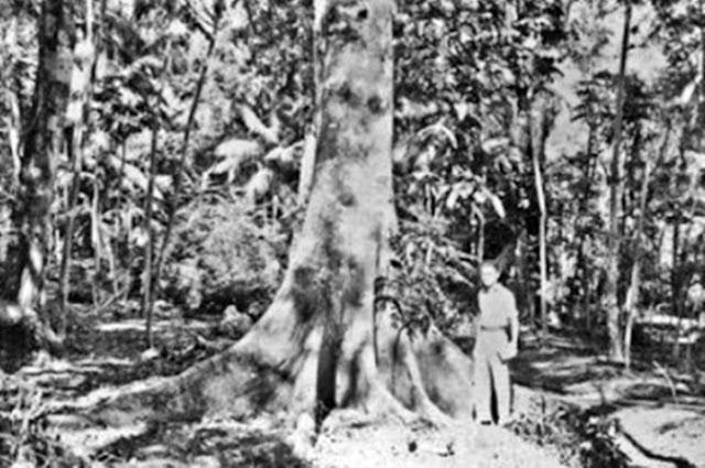 Aluno cria blog para mostrar a história do Município de Iretama