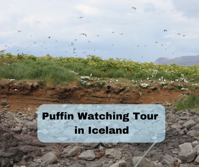 Elding Puffin Watching Tour in Iceland