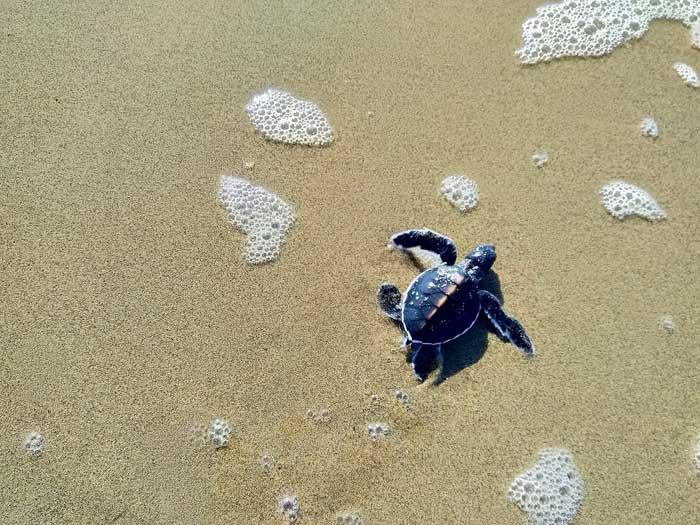 Fasilitas Wisata Pantai Sukamade Banyuwangi