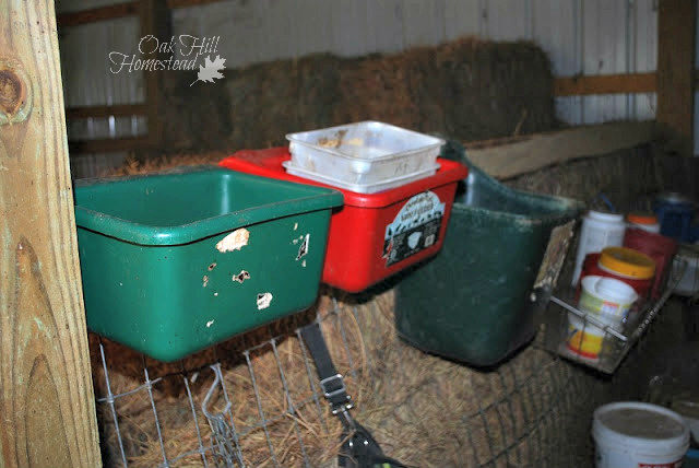 """Goat feeders hang on a convenient 2x4"""" in my feed room when not in use."""