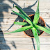 Aloe Care for Acid Reflux