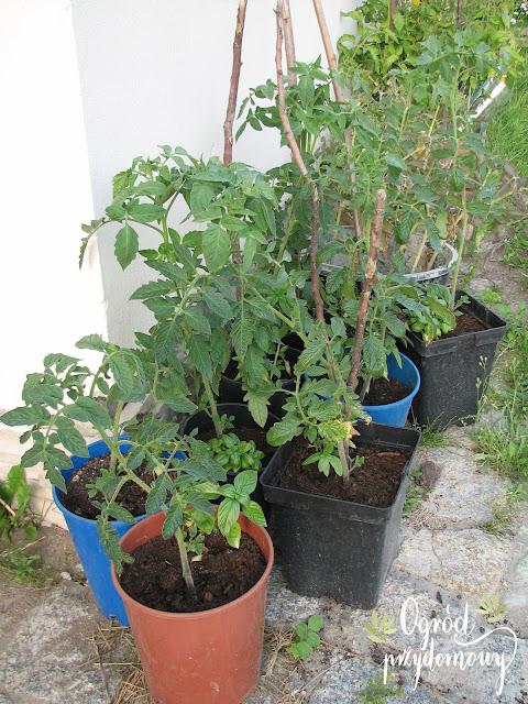 projekt warzywnik, ogród przydomowy