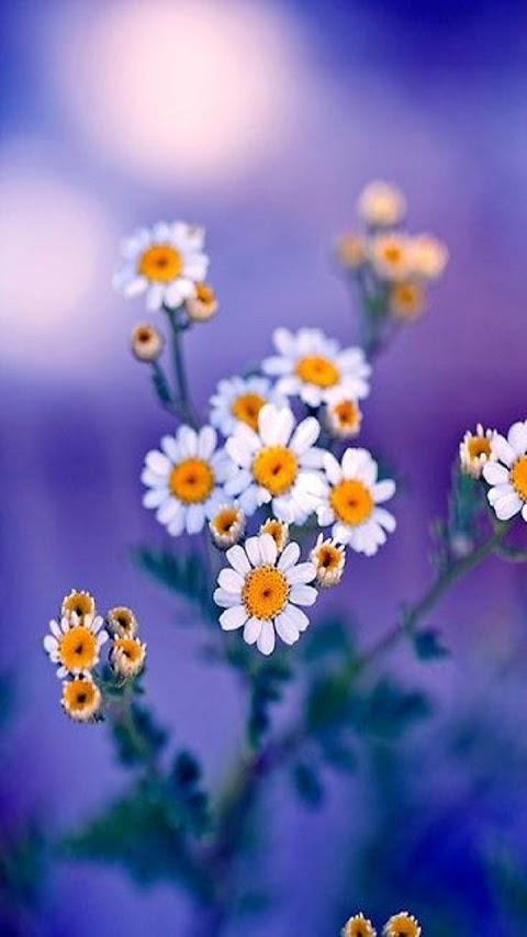 Cánh Hoa Màu Trắng Tươi Đẹp