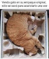 vendo gato humor
