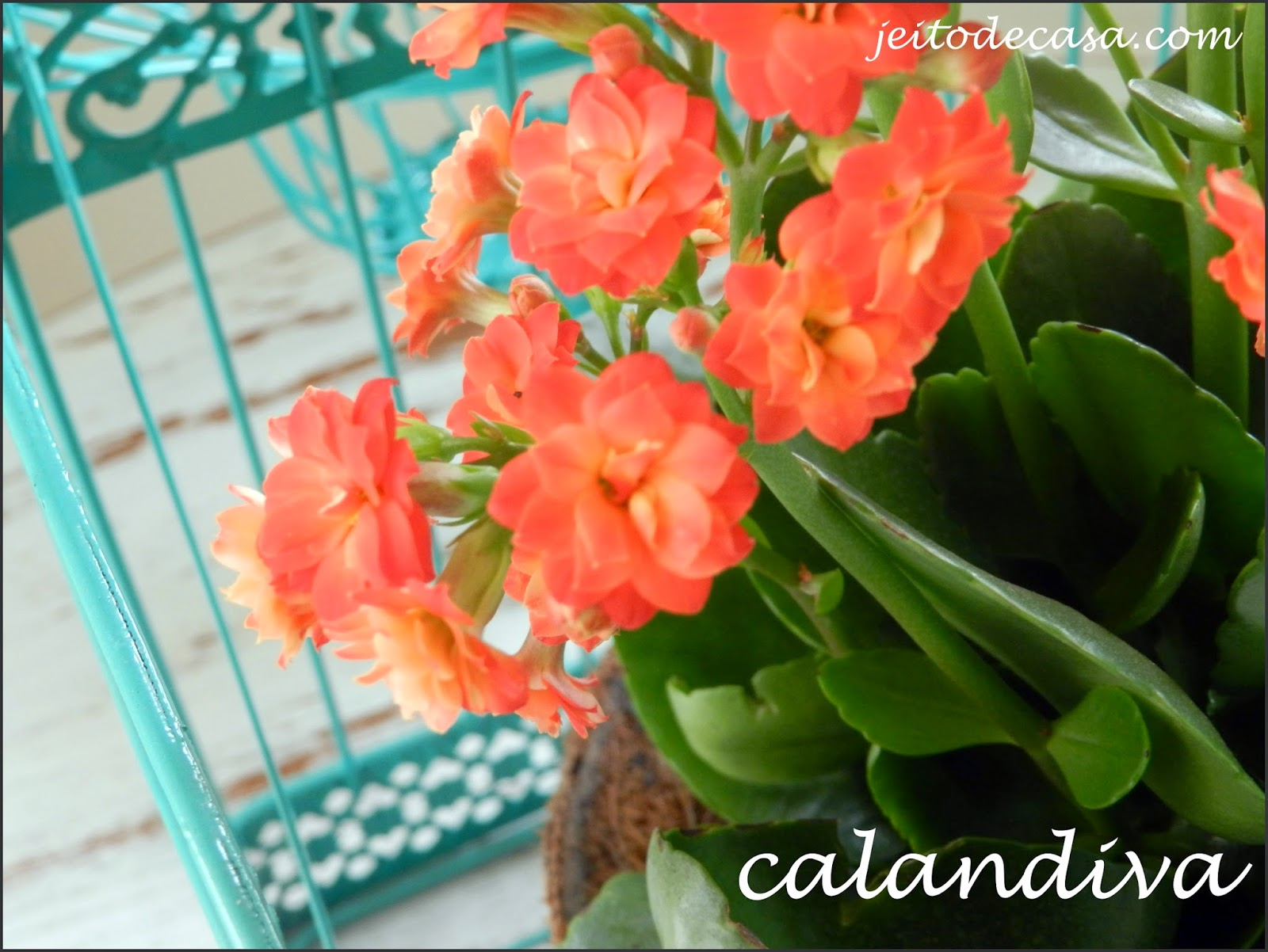 Kalanchoe Ou Calandiva Jeito De Casa Blog De Decoracao E